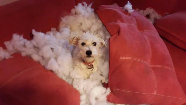 Cómo entrenar a tu perro para que no muerda tus cosas