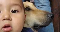 ¿Cómo preparo a mi perro para la llegada de mi bebé?