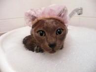 La higiene de tu gato