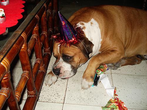 Cómo cuidar a nuestras mascotas durantes las fiestas