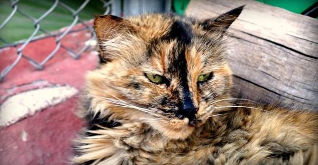 Cómo cuidar a tu gato cuando envejece
