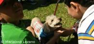 Lenguaje canino ¿qué te quiere decir tu perro?