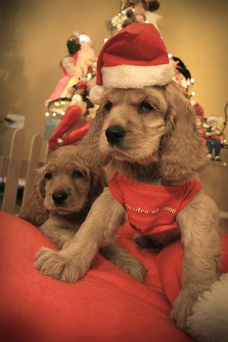 El perro como regalo de navidad