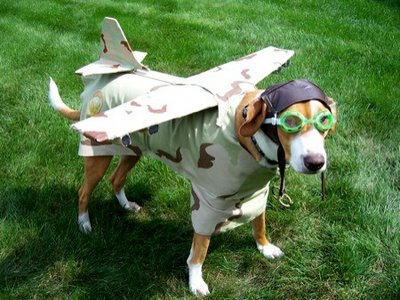 Viajando en avión con tu perro