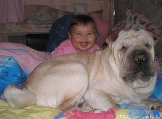 Niños y mascotas: Cómo convivir en armonía