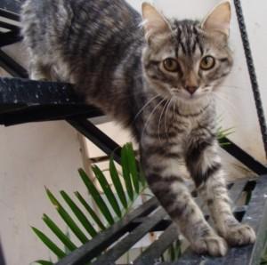 Lenguaje felino ¿qué te quieres decir tu gato?