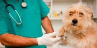 Algunos Veterinarios pro-esterilización