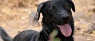 Cómo educar a un perro excesivamente ladrador