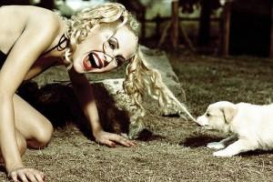 Cómo evitar 4 errores comunes en la educación de un cachorro.