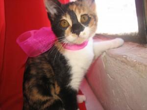 Cuidado y comprensión de gatos adoptados
