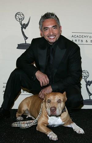 César Millán, el 'Encantador de perros', enseña a educar mascotas por TV y libros