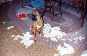 El perro destructor