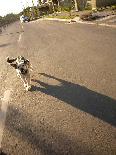 Cómo buscar a tu perro o gato extraviados