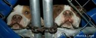 Estrés en los perros encerrados