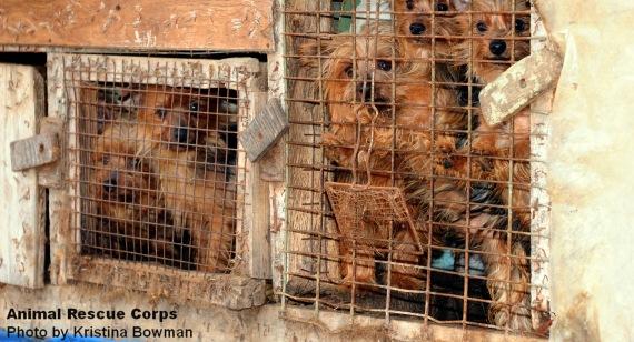 ¿Qué existe detrás de los criaderos de cachorros?