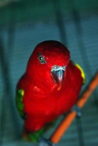 Importación de especies invasoras para el mercado de mascotas amenaza la biodiversidad