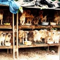 La fábrica de perritos
