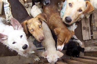 Repudiamos el hacinamiento de mascotas