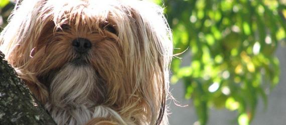 10 Razones Principales para Esterilizar o Castrar a tu Mascota