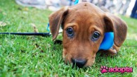 La diferencia entre regalar y dar en adopción un animal
