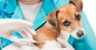 El uso del microchip en perros y gatos
