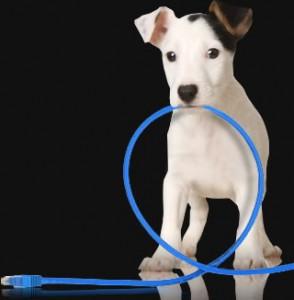 Consejos iniciales al adoptar a mi nuevo perrito