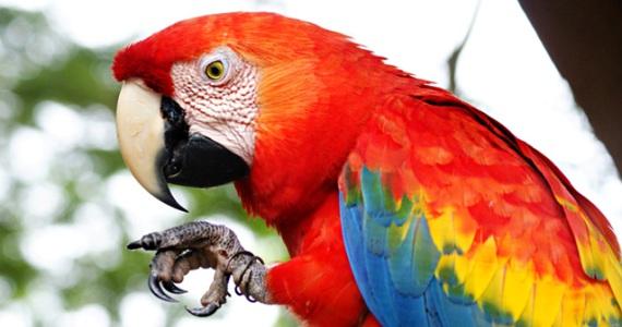 ¿Cómo puedo denunciar la posesión, comercialización, maltrato, transporte de animales y plantas protegidos por la Ley?