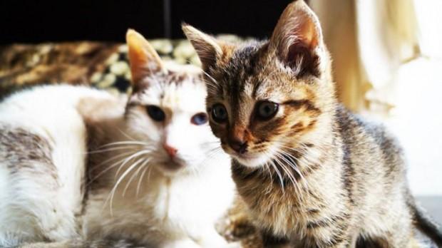 Algunas respuestas respecto a esterilizar gatos