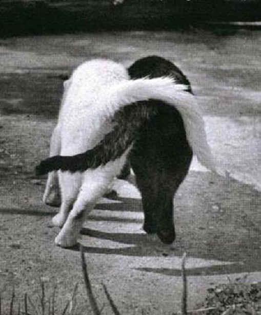 Hogares con más de un gato