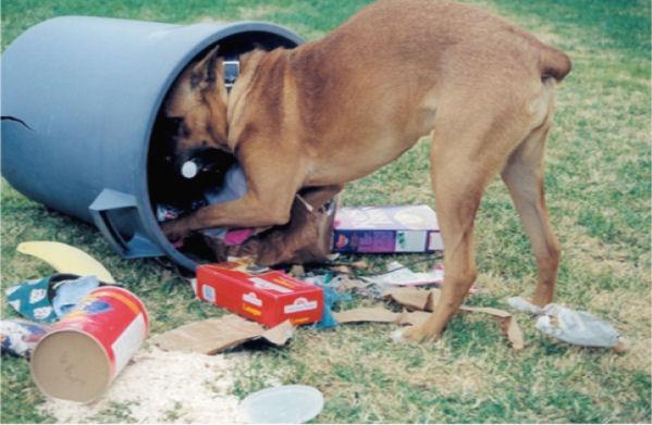 Tu perro come cosas del suelo o de la basura. Problemas de comportamiento comunes