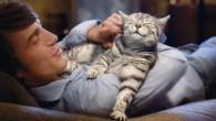Gatoterapia: Relájate con tu felino con conciencia