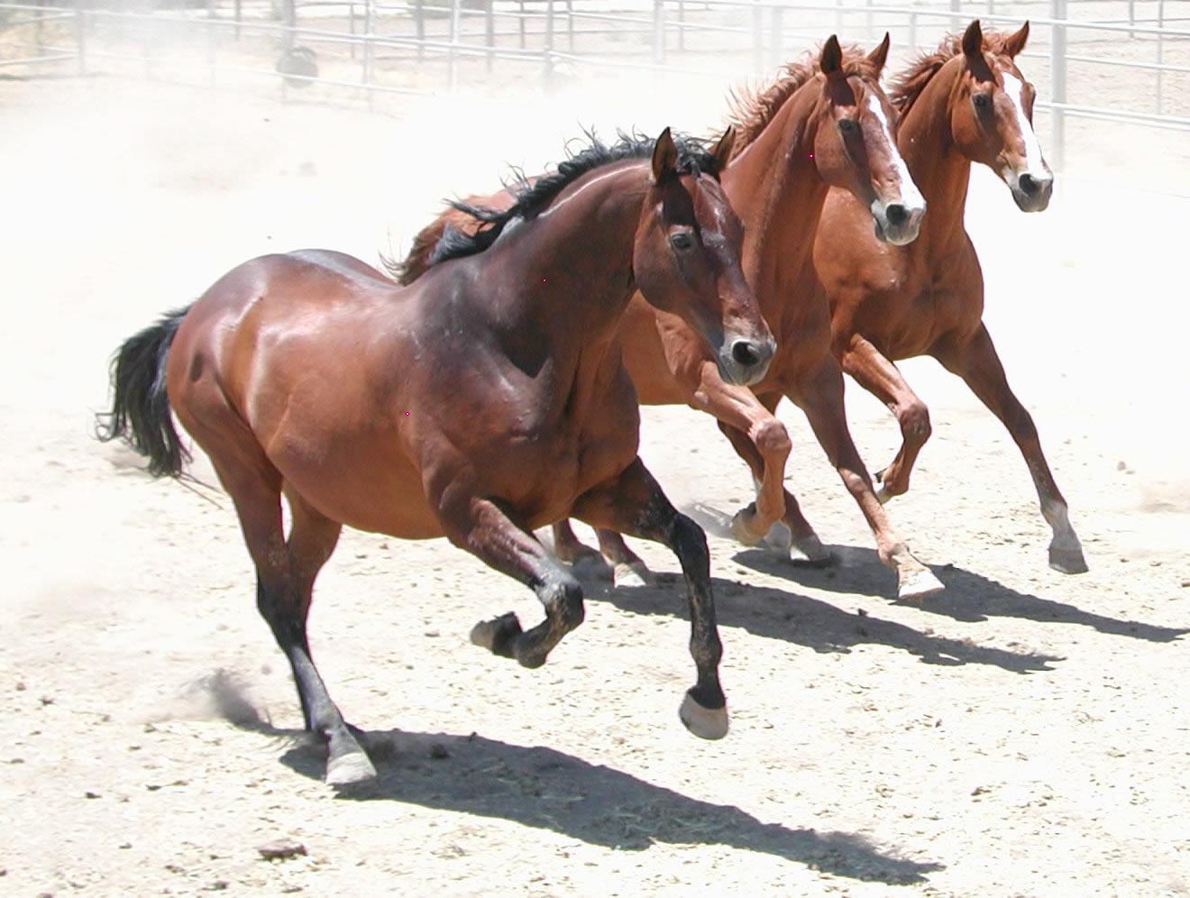 El lenguaje de los caballos