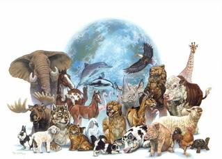 Cómo formar una Organización Protectora de Animales