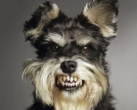 La agresividad de algunos perros hacia las personas
