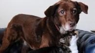 Cómo vivir con un perro ciego