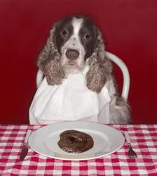 Coprofagia canina: una molesta costumbre