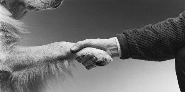 ¿Cómo me entregan mi perro o gato en una adopción responsable?