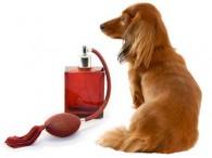 Limpiadores y desodorizantes para casas con mascotas