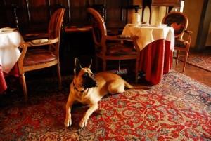 Hoteles Pet Friendly en Jalisco