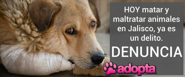 Acerca de cómo y dónde denunciar casos sobre animales en Jalisco