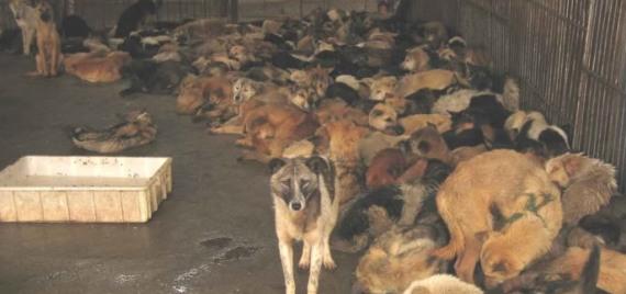 Acumulación de animales