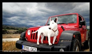 Consejos para que tu mascota viaje en el auto evitando pasar un mal rato.