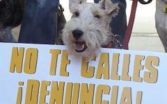 Denuncias de servicios veterinarios por mala praxis
