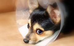 La salud de mi animal de compañía, un poco más que solo llevarlo con el veterinario