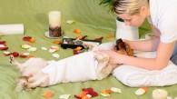 Opciones alternativas para el cuidado de tu perro y/o gato