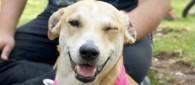 Sugerencias para obtener una buena foto de tu adoptable