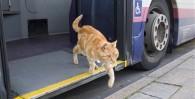 ¿Está permitido subir perros o gatos al transporte público de Guadalajara y la zona metropolitana?