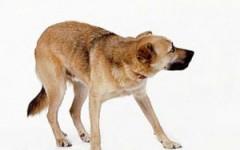 Mascotas poco adoptables