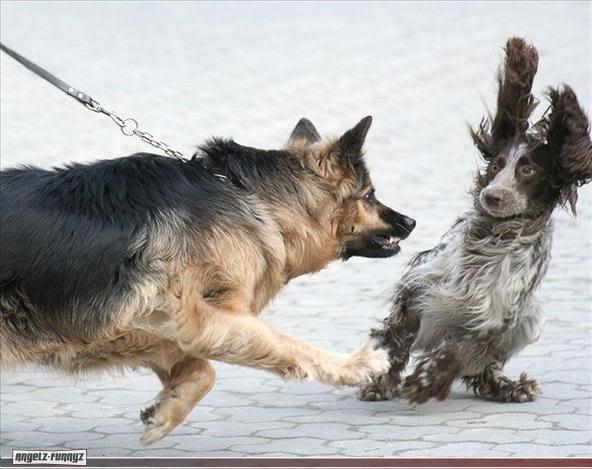 Domina a tu perro agresivo