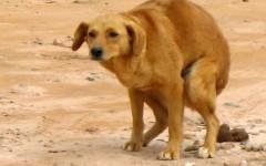 ¿Qué pasa con los deshechos de mi perro?
